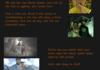 LoK Book 3 Trailer Analysis