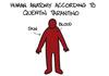 Tarantino's Anatomy...